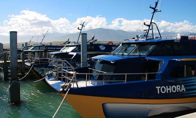 El punto de partida para las excursiones de observación de ballenas es en el puerto de Kaikoura.
