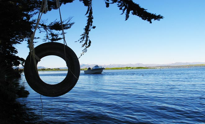 Honderden watervogels en zwarte zwanen bewonen in de wateren van het Ellesmere-meer. U loopt langs het meer naar het schiereiland Banks.