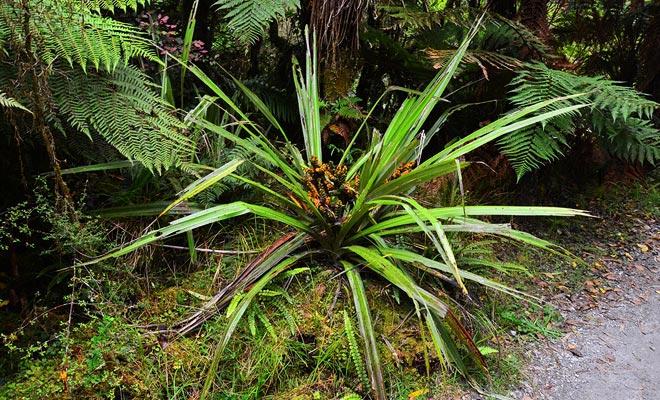 La precipitación récord de la región es el origen de una exuberante vegetación.