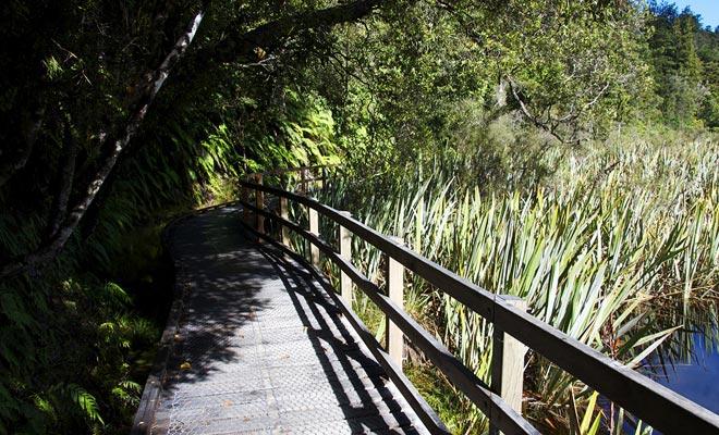 La fauna del lago Matheson es mucho menos pacífica de lo que uno podría pensar. Anguilas gigantes, Pukekos ...