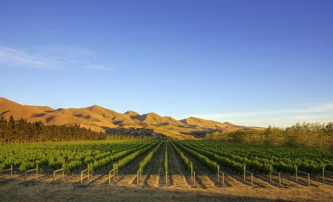 El Canterbury es una región con sus altibajos, y hay tierras sin alivio y paisajes grandiosos. Los viñedos están entre los mejores de esta región.