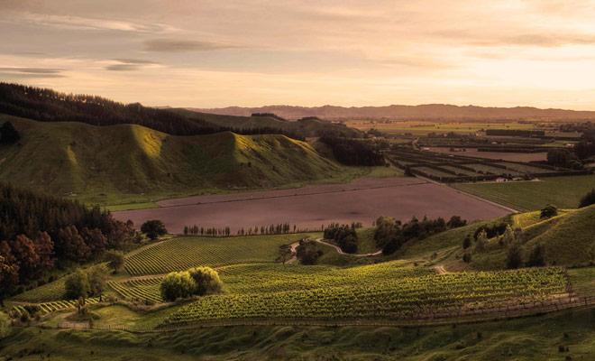 El área de Gisborne no es la más turística del país, pero tiene excelentes viñedos que pueden justificar un desvío durante su estancia.