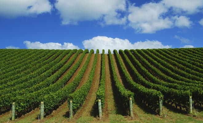 El Northland no produce grandes vinos, pero algunos vinos originales que puede probar si usted está visitando la región.