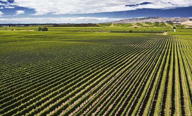 De oogst begint meestal in het begin van Nieuw-Zeeland. In deze periode hebben ondernemers veel arbeidskrachten nodig. Een koopje voor jonge reizigers met een werkvakantievisum.