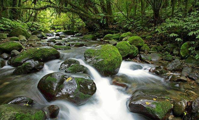 Met een regenval die jaarlijks 7 meter bereikt, is het Fiordland een van de natste gebieden van de planeet. Moss omvat zowel bomen als rotsen.