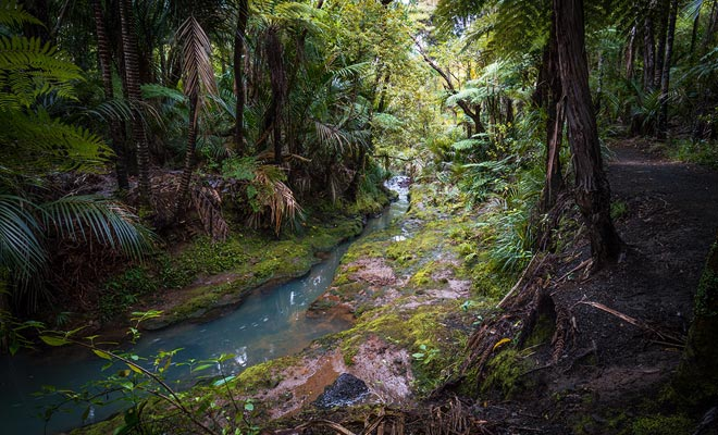 Con una densidad de población cercana a cero, el Fiordland es una región húmeda cubierta de bosques impenetrables.