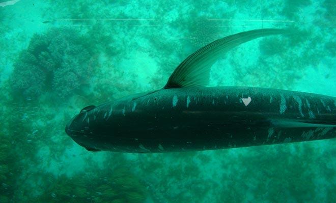 Het observatorium, gelegen op een diepte van 10 meter, laat u toe om het waterleven van het fjord te bewonderen. Er zijn zelfs dolfijnen.