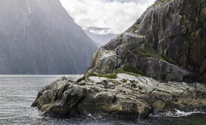 Durante el crucero de Milford Sound, no olvide sus binoculares y probablemente tendrá la oportunidad de observar la colonia de lobos marinos que pueblan el fiordo más famoso de Nueva Zelanda.
