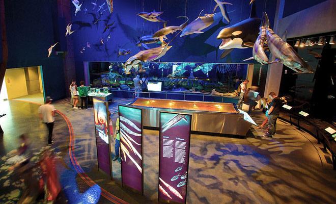El Te Papa Museum es un museo gratuito situado en el centro de Wellington, en el muelle.