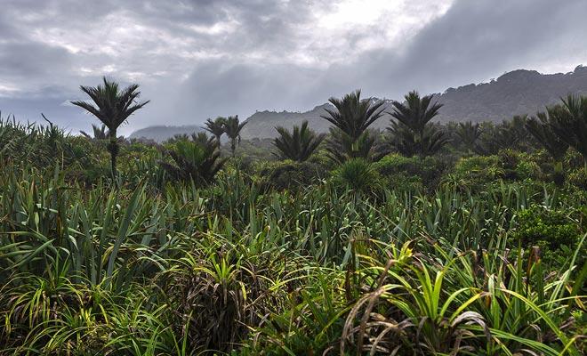 Los microclimas de Nueva Zelanda permiten que las palmeras crezcan muy al sur.