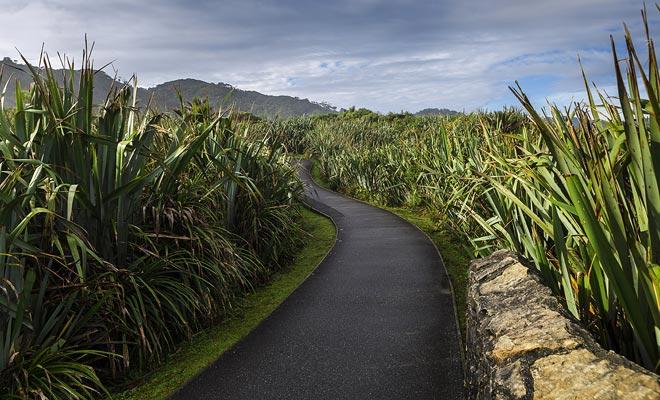 El lino permitió que los maoríes hicieran cestas. Hoy en día sigue siendo utilizado por los artesanos.