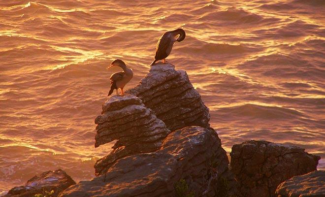 Deze foto illustreert de aard van de Pancake Rocks. Elke laag rock vertegenwoordigt een interval van een miljoen jaar! Dit kan vertigo veroorzaken, maar de vogels geven het niet om.