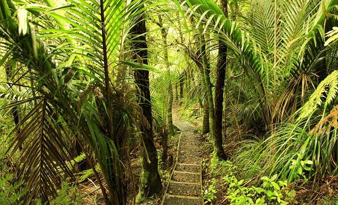 De cascade van Ohau Stream ligt op een paar kilometer van het dorp. Een korte tien minuten wandeling door het bos en je bent aangekomen!