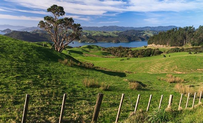 Se estima que las ovejas son unos 30 millones para disfrutar de los grandes prados.