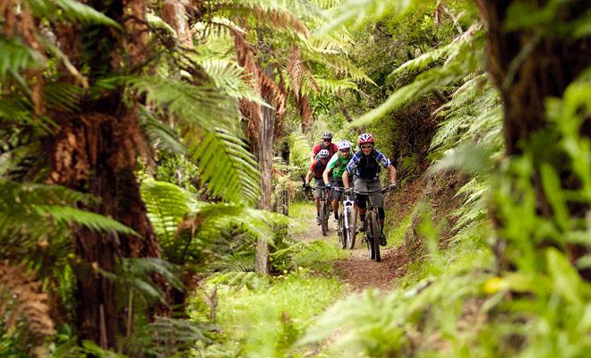 El bosque de las secoyas se dedica en gran medida a paseos en bicicleta, con senderos reservados para los ciclistas.