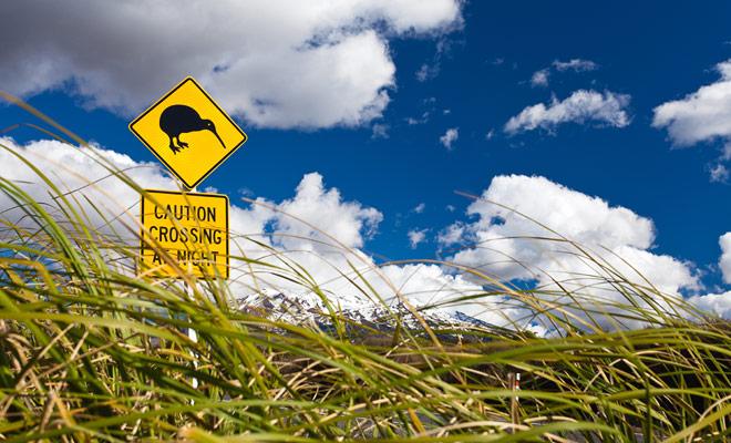 El tráfico de carretera es bastante bajo en Nueva Zelanda y algunas áreas sólo ven un coche cada hora. Los animales no dudan en cruzar las carreteras porque no se sienten en peligro. Sea cauteloso, especialmente si un signo indica un mayor riesgo.