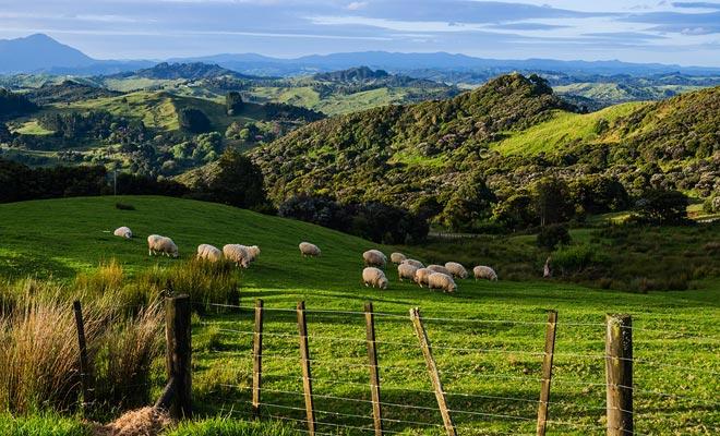 La superposición de dos placas tectónicas ha causado que Nueva Zelanda emergiera del Océano Pacífico.