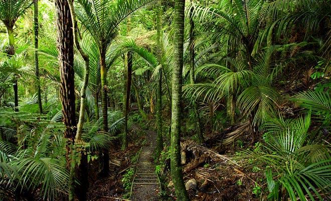 Het oversteken van het bos is de laatste stap. Dit zou het aangenaam moeten zijn, aangezien de frisheid kalmeert na een dag waarop de zon wordt blootgesteld. Maar de vermoeidheid die u opgehoopt heeft, voorkomt dat u dit onderdeel volledig geniet.