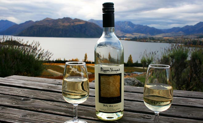 Nieuw-Zeeland Sauvignon Blanc is ongetwijfeld het beste in zijn klas. Maar andere wijnen zoals Pinot Noir zijn even uitstekend.