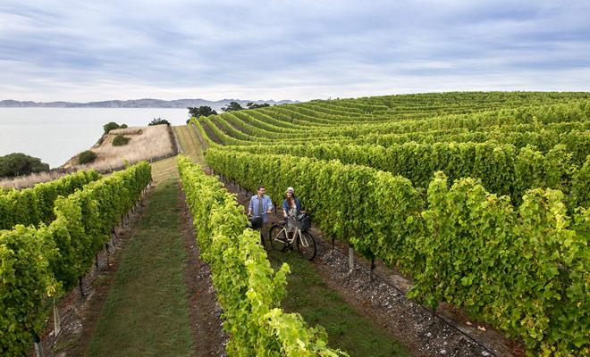 Si los viñedos se encuentran en las dos islas del país, la calidad de los vinos producidos varía principalmente según el clima. Jade Island parece ser favorecida y da el mejor Sauvignon blanc y Pinot noir.