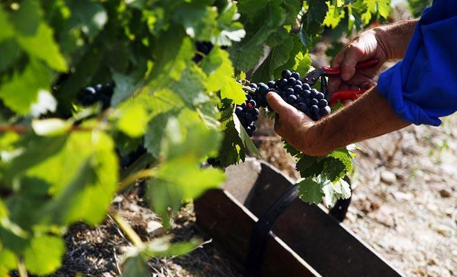 In tegenstelling tot de seculiere traditie om de wijnmaker te houden geheimzinnig, delen de producenten van Nieuw-Zeeland hun kennis. Het resultaat heeft alle verwachtingen overschreden.