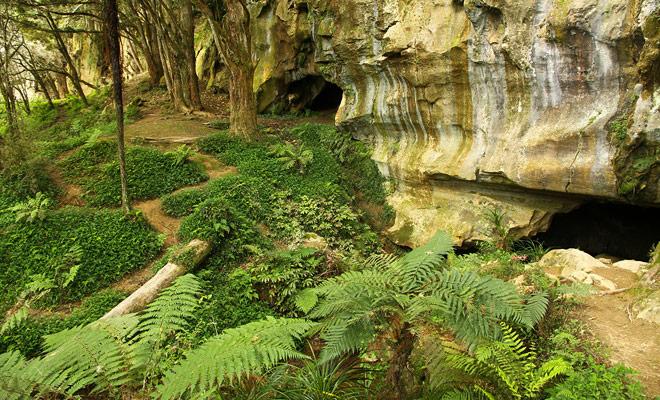 De Waipu Caves liggen tussen Whangarei en de stad Waipu en het ligt op slechts 20 km rijden.