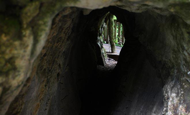 Er zijn tal van grotten in het bos. De meeste kunnen veilig worden onderzocht zo lang als geen teken de toegang verbiedt.