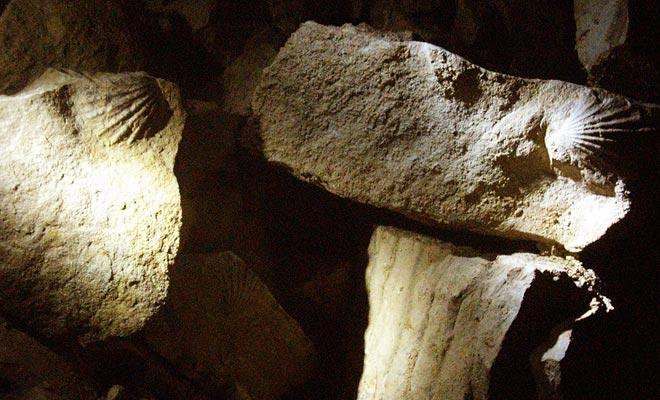 Toda la zona de Waitomo se situaba anteriormente bajo el mar. Esto se evidencia por la presencia de numerosos fósiles de mariscos.