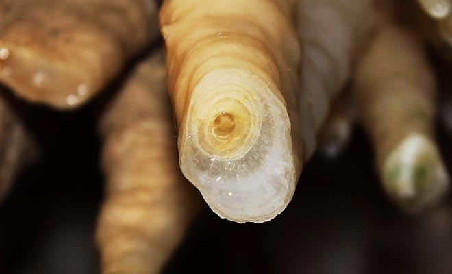 Het duurt vaak meer dan een eeuw om een stalactiet te vormen.