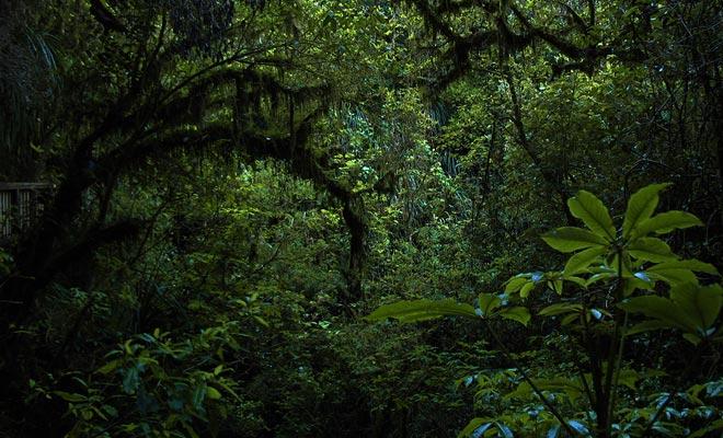 Er zijn veel grotten verborgen in het bos. Een goede reden om off-track te vermijden en de route te volgen.