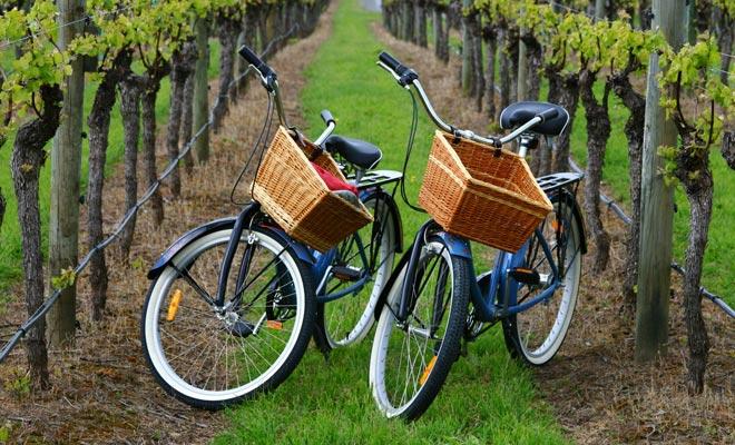 Er zijn picknicktafels in Rippon Vineyard en u kunt kaasplatters bestellen met een goede fles ter plaatse.