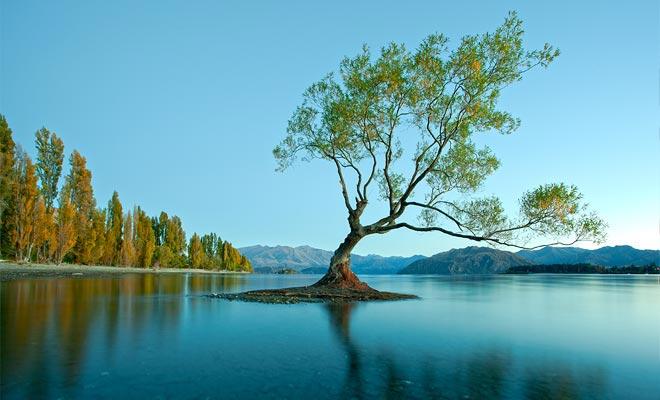 De eenzame boom van Wanaka is waarschijnlijk de bekendste van het land. Het groeit in water bij de kust.