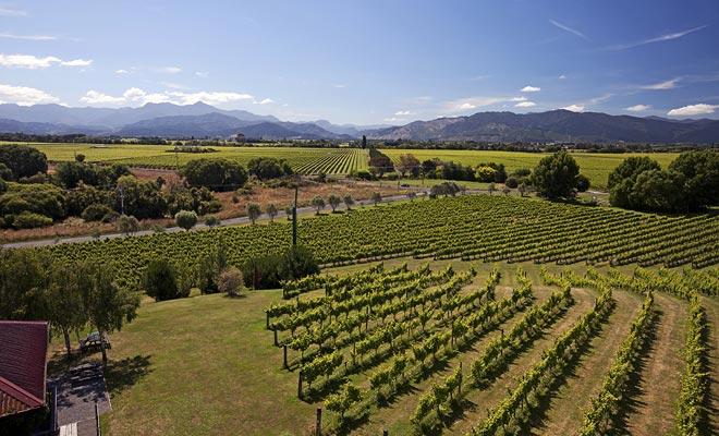 Los viñedos de Nueva Zelanda aprovechan la riqueza del suelo volcánico. Algunas cepas dan un excelente sauvignon blanco.