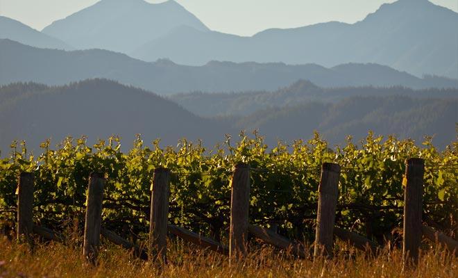 De rijkdom van de vulkanische grond verklaart deels het succes van de wijnen die in de Otago-regio worden geproduceerd. De andere reden voor succes is gekoppeld aan de wederzijdse bijstand van de exploitanten die hun ervaring gemeen hebben.