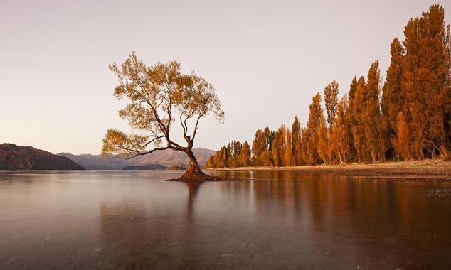 Wanaka es una ciudad de Otago famosa por sus paisajes.
