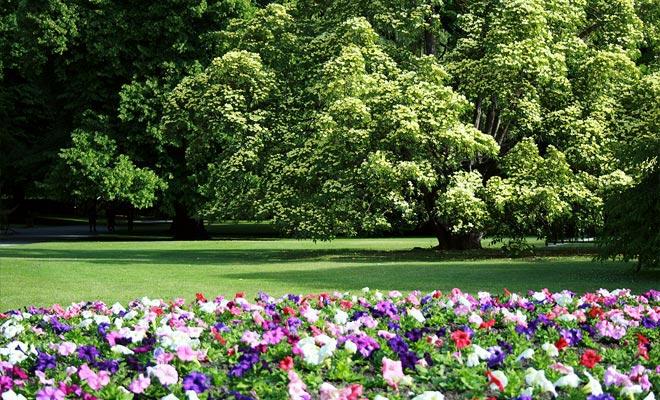 El Festival de Jazz y muchas actuaciones se llevan a cabo en el Jardín Botánico de Wellington. Un gran espacio verde llamado El Dell da la bienvenida a los espectadores. También es un lugar perfecto para hacer picnic.