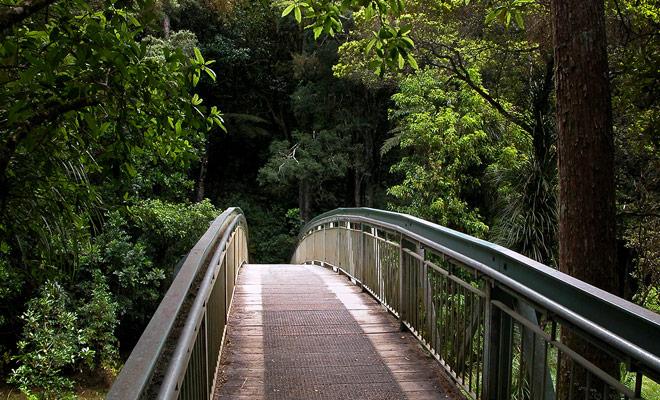 Om naar de Whangarei Falls te gaan, volgt u een korte wandeling en een brug die de Hatea River oversteken.