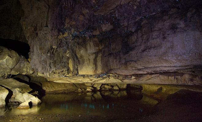 De gloedwormen die op het plafond schijnen zijn de echte reden voor uw bezoek aan de grot.
