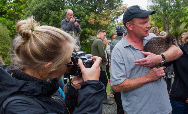 Het observeren van kiwi's buiten een reservaat is een zeldzame ervaring (ook voor Nieuw Zeelanders), aangezien de Nieuw-Zeelandse mascotte nog steeds op de lijst met bedreigde soorten staat.