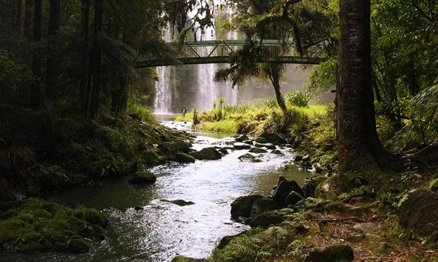 Whangarei Falls en Northland