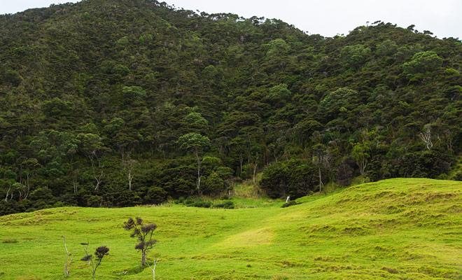 De Kiwi's leven in het bos en als je ooit hun geluid in de nacht hoort, is het nogal zeldzaam om ze te ontmoeten, vooral als je een paar weken alleen Nieuw-Zeeland bezoekt.