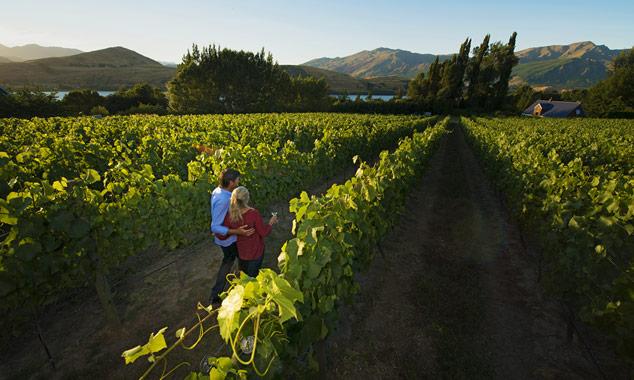 Venga a visitar los viñedos y deguste los vinos de Nueva Zelanda.