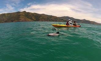 De kajak is een alternatieve oplossing om dolfijnen te benaderen zonder hen te schrikken.