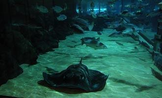 Het grote aquarium van Kelly Tartlon's even heeft een onderzeese tunnel.