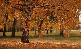 Sommige mooie landschappen van Nieuw-Zeeland in de herfst.