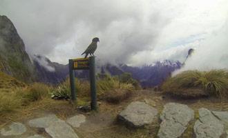 La caminata más hermosa del mundo permite admirar las Keas y muchas otras sorpresas ...