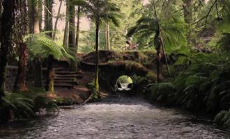 Explore los senderos en el Bosque de Redwood en bicicleta.