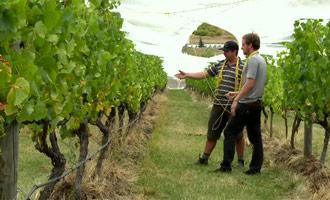 No te pierdas esta gran noticia sobre los vinos de Nueva Zelanda y su degustación.