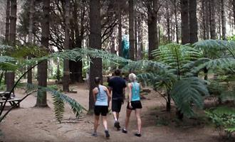 Introductie van het Adventure Forest