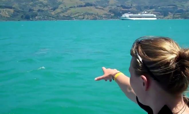 Vous pouvez nager avec les dauphins d'Hector mais vous devrez porter une combinaison, car l'eau de la péninsule est assez froide.